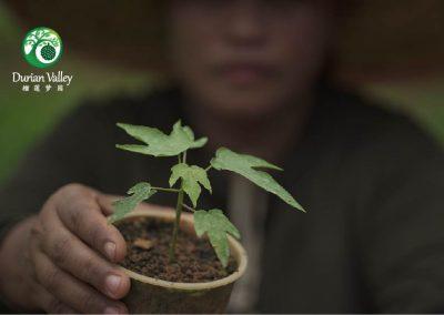 Plantation_DV-04